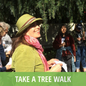 Take a tree walk