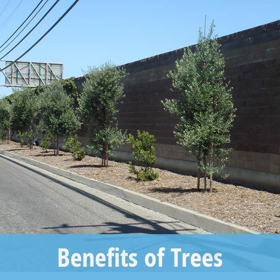 Tree Info Canopy Canopy