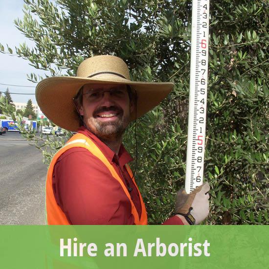 550x550-hire an arborist