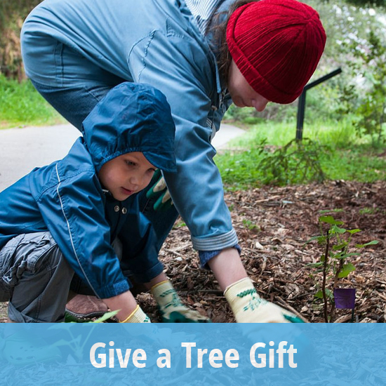 Tile - Give a Tree Gift