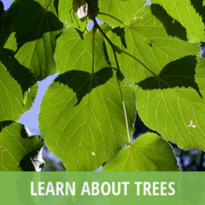 Learn about Trees