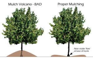 mulch-volcano4
